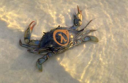 A (non-Head) Crab
